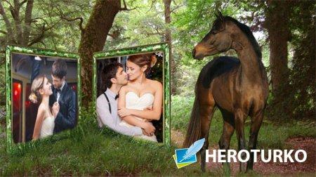 Рамка для фотомонтажа - Лошадь смотрит на вас