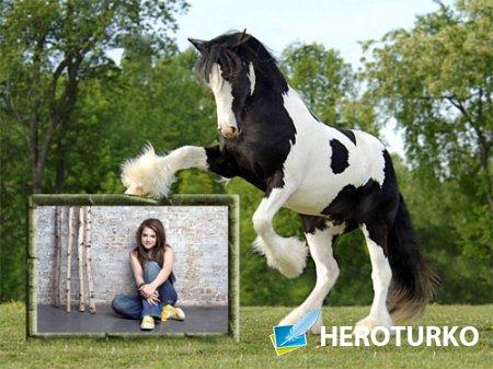 Рамка для фото - Красивая черно-белая лошадка с вашим фото