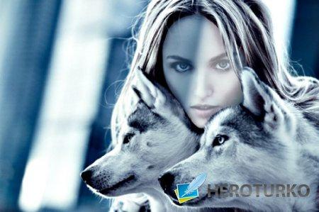 Фотосессия с двумя красивыми волками - шаблон для фото