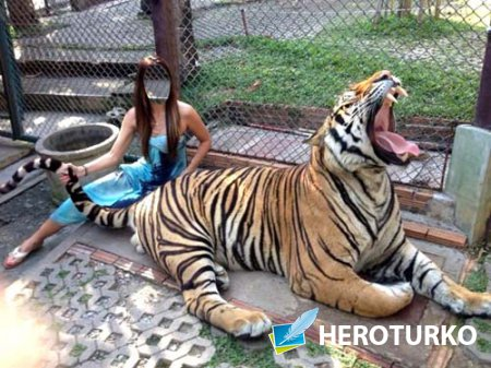 Шаблон для фотошоп - Брюнетка с хищником