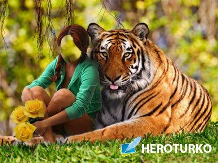 Шаблон psd - С красивым тигром на лужайке