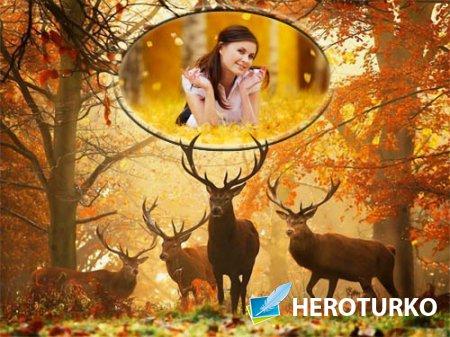 Фоторамка psd - Осенью в лесу