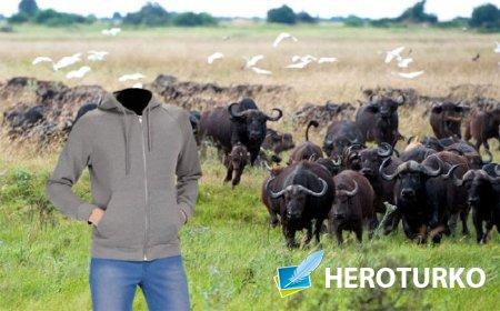 Шаблон мужской - На поле с бизонами