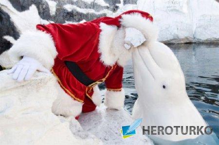 Шаблон psd мужской - Дед мороз и белуха