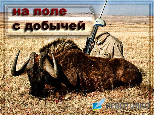Мужской фотошаблон для фотошоп - На поле с большим буйволом