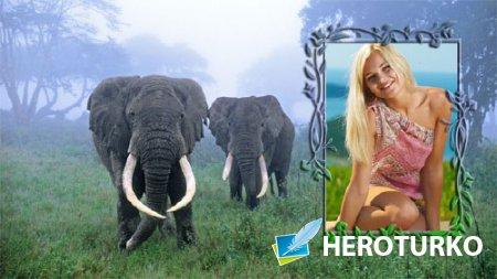 Фоторамка для фотошопа - 2 слона