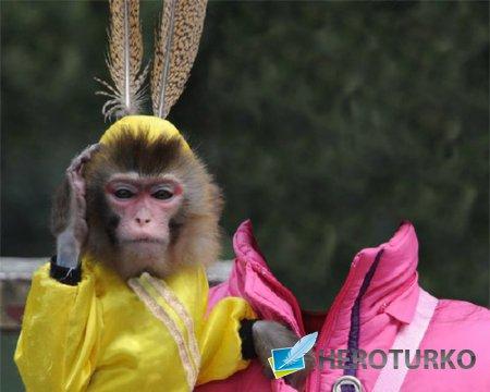 Шаблон для фотошопа - С маленькой обезьянкой