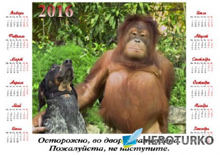 Календарь 2016 - Обезьяна с собакой