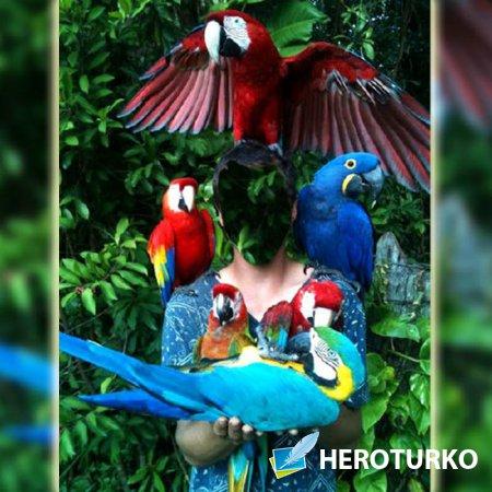 Мужской фото шаблон - Среди больших попугаев