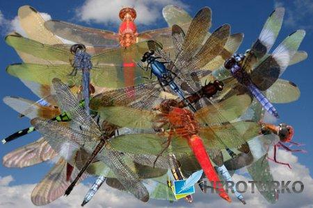 Клипарт Прозрачнокрылые стрекозы лета
