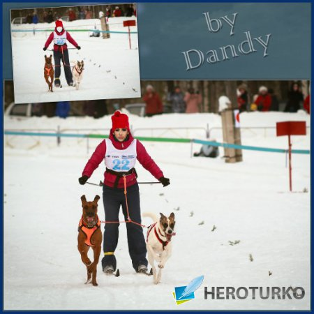 Шаблон для фотошопа - На лыжах за собаками