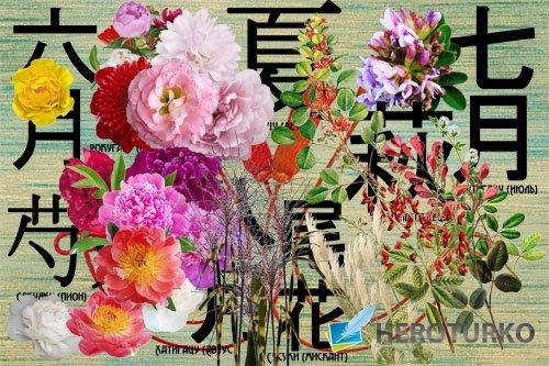 Клипарт Растения - японские символы летних месяцев