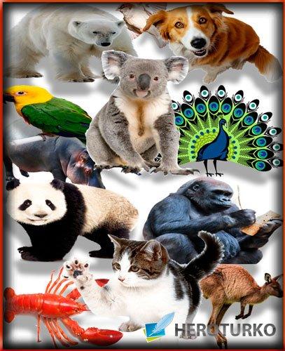 Большой сборник клипартов - Животные