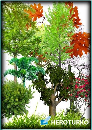 Большой сборник Клипартов - Деревья, растения, кусты