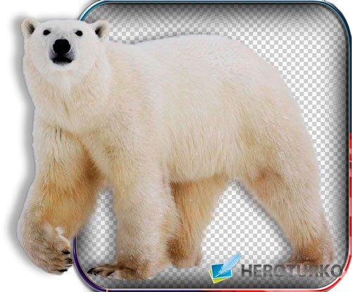 Картинки png - Животные