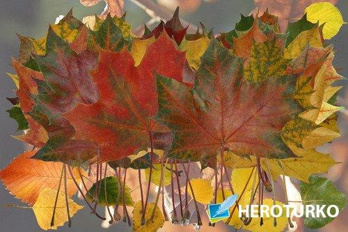 Клипарт Осенний листопад