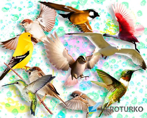 Картинки png - Птички