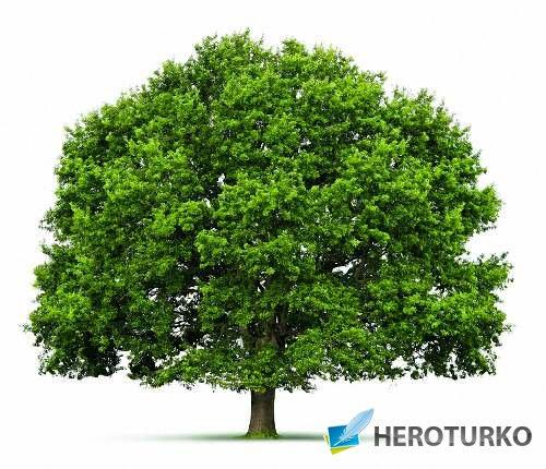 Картинки png - Деревья