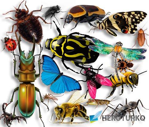 Картинки на прозрачном фоне - Огромный набор насекомых
