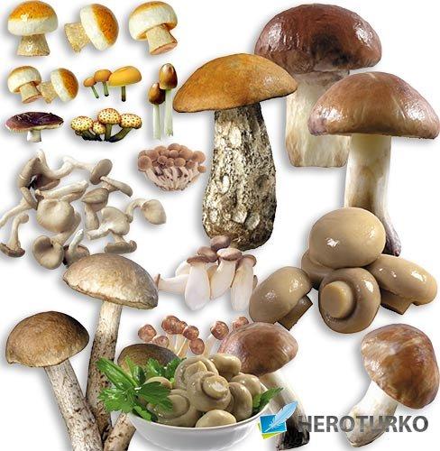 Фотошоп png - Разные грибы