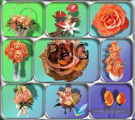 Png Клипарты - Оранжевые розы