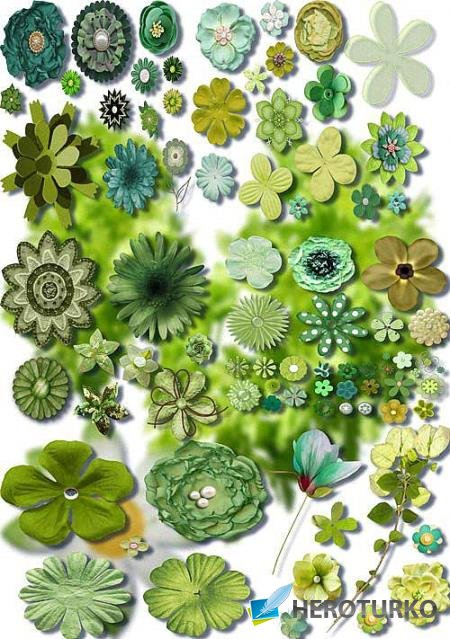 Клипарты png - Зеленые цветы