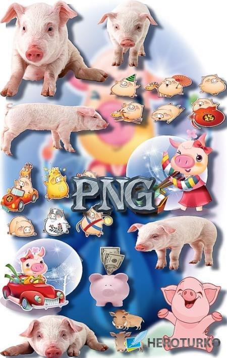Фотошоп Png клипарты - Свиньи